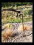 FORK BIRD